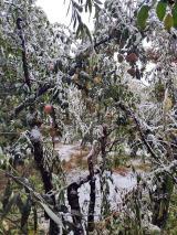 जम्मू-कश्मीर में समय से पहले बर्फबारी, 3 की मौत
