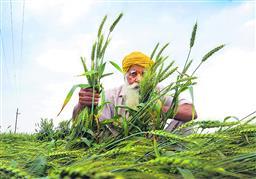 कृषि आय बढ़ाने में विफल मुक्त बाजार