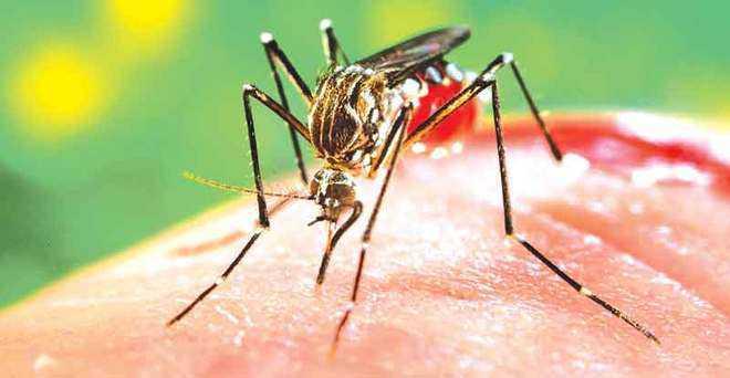 अम्बाला में डेंगू ने दी दस्तक, अभी तक 9 मामले आये सामने