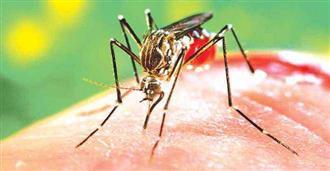 डेंगू एवं वायरल ने बढ़ाई चिंता